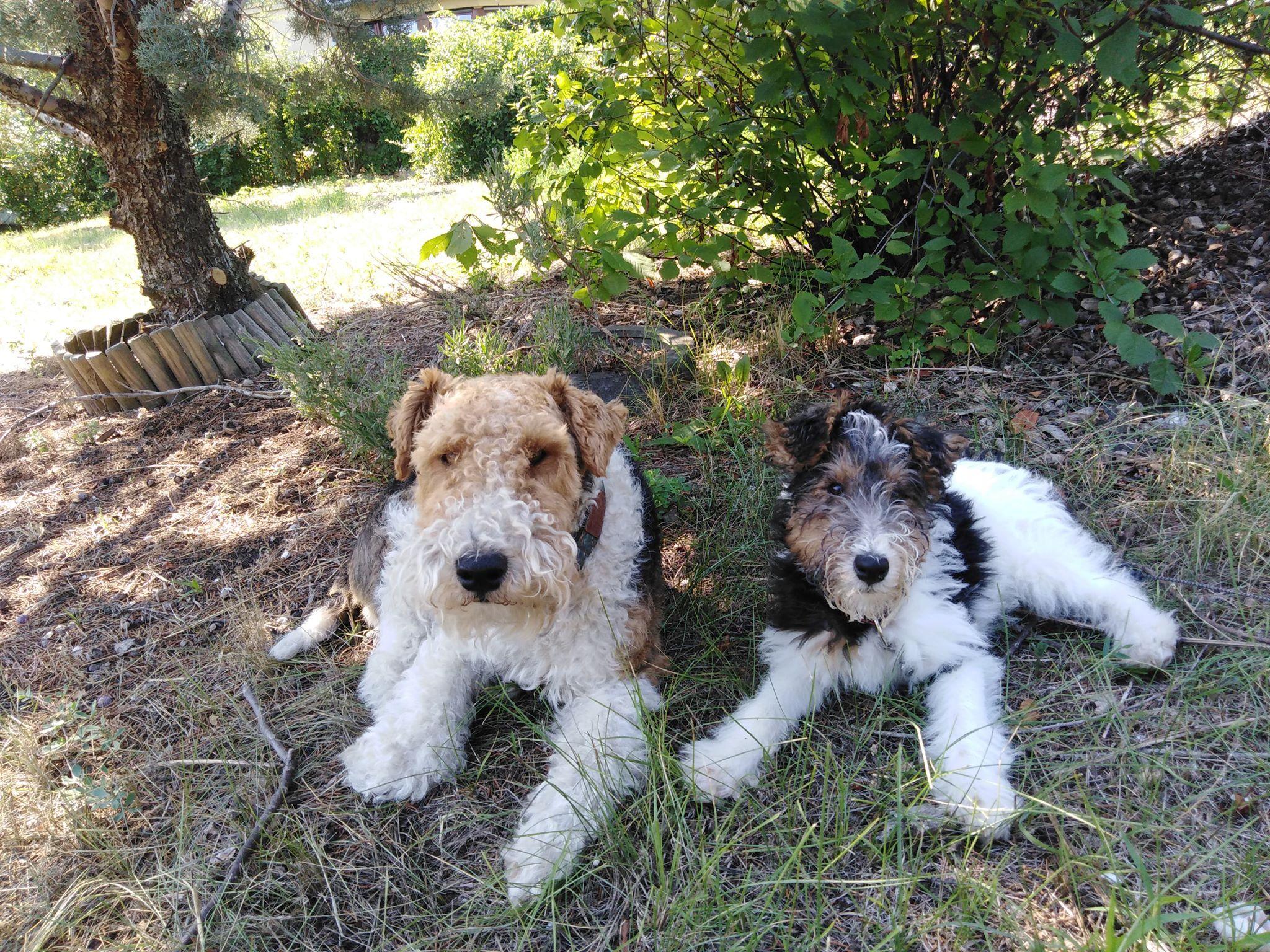Angyalkártya szombatra: A Kutya